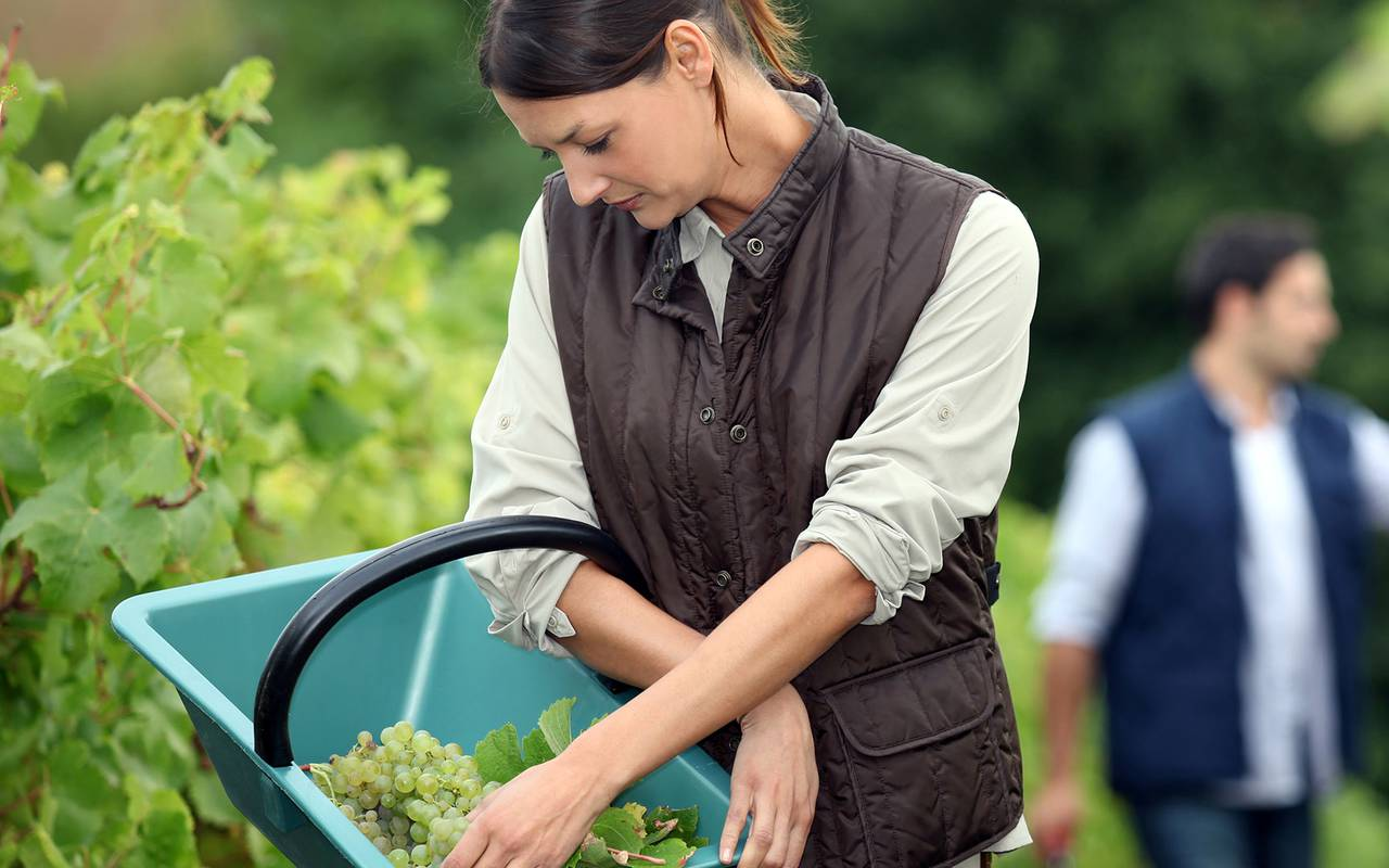 Woman doing the harvest
