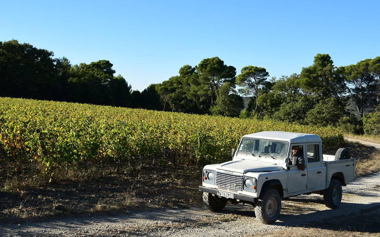 Vineyard - wineries in provence