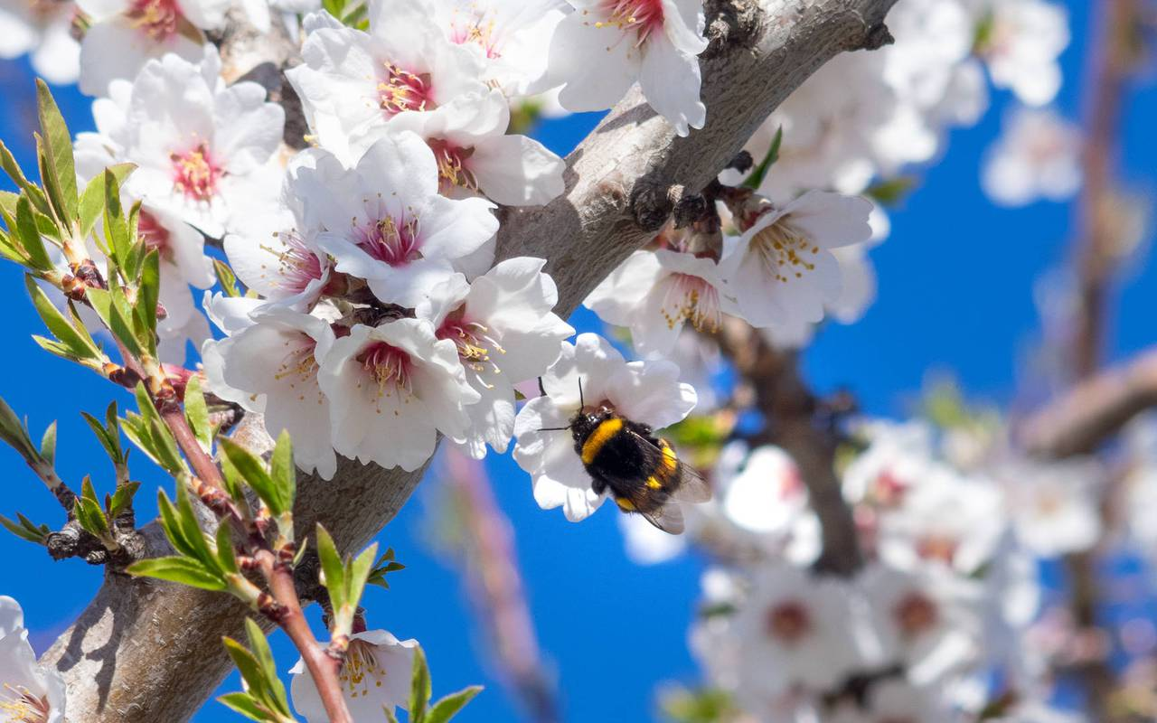 bee - Provence wine tours