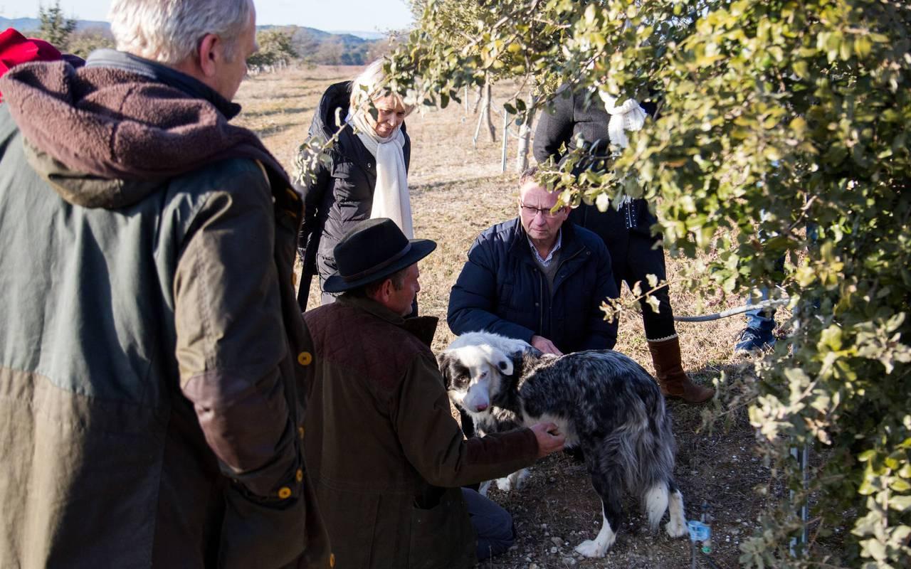 Truffle - provence vineyards