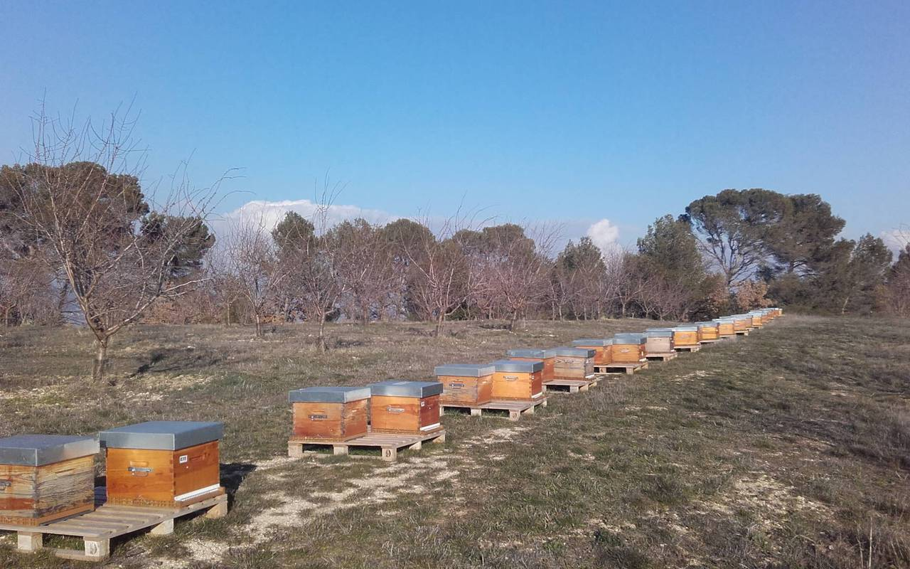 Hives - provence vineyards
