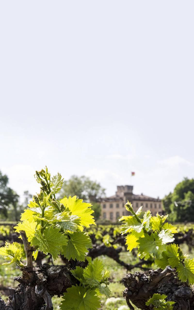 Vine - Provence wine tours