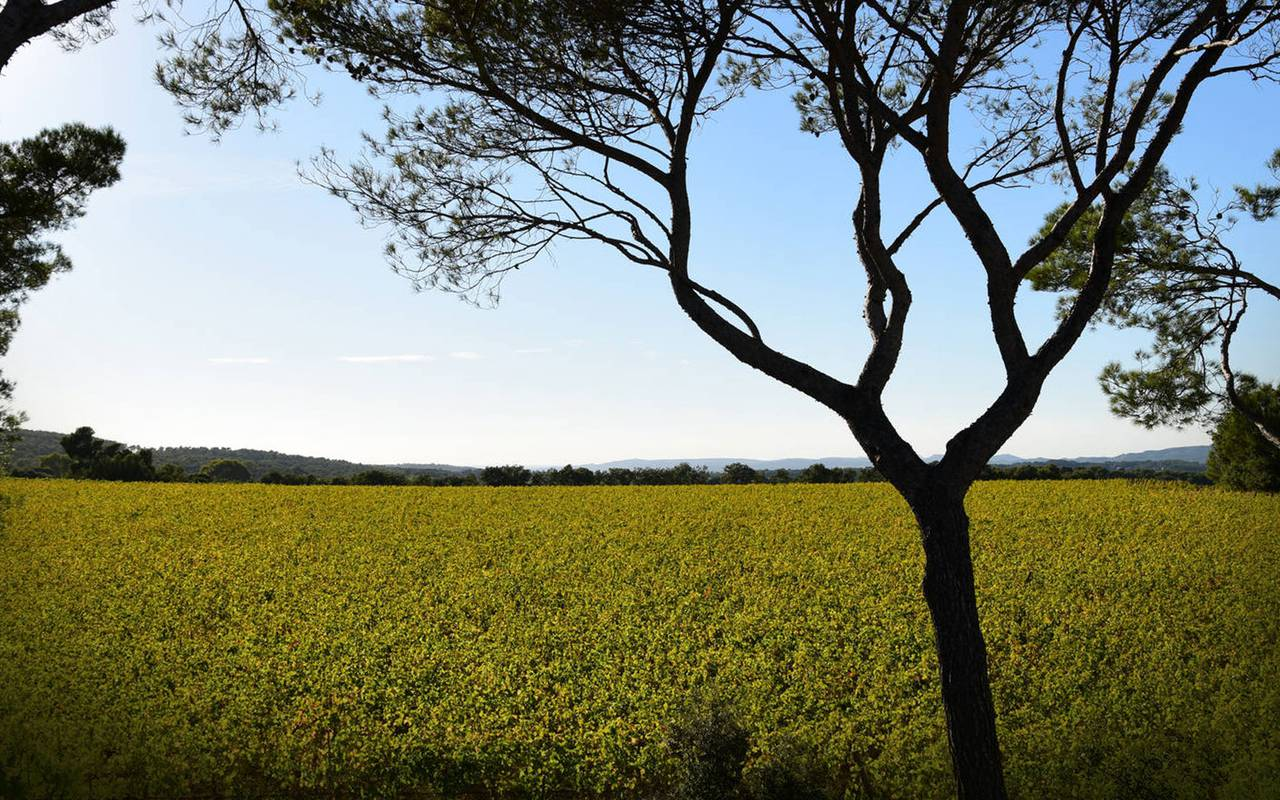 photo champ - vignoble provence