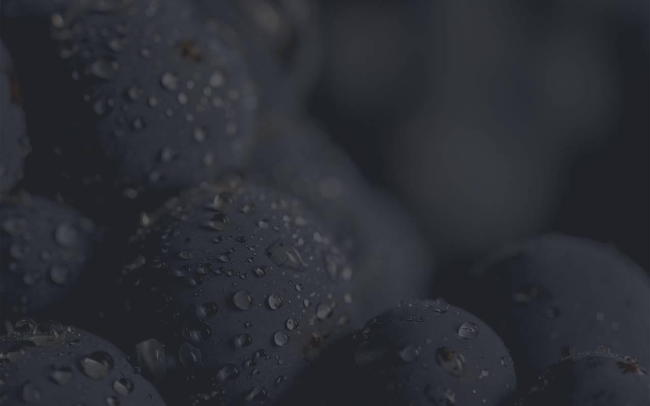Raisins - domaine viticole aix en provence