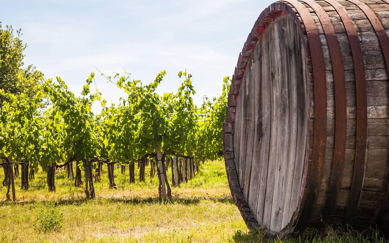 Domaine viticole - vignoble aix en provence