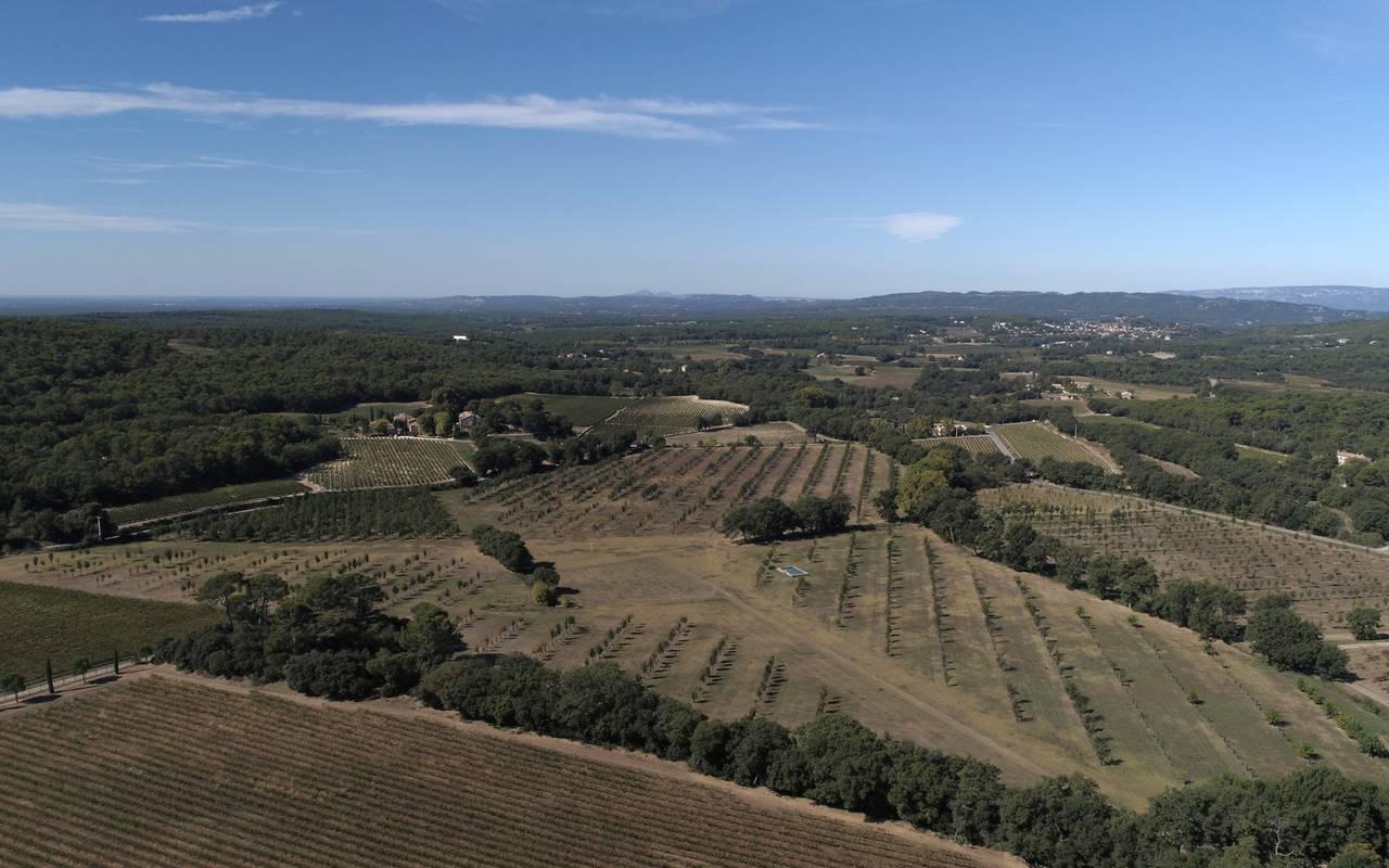 vue aerienne paysage forestier - vignoble provence