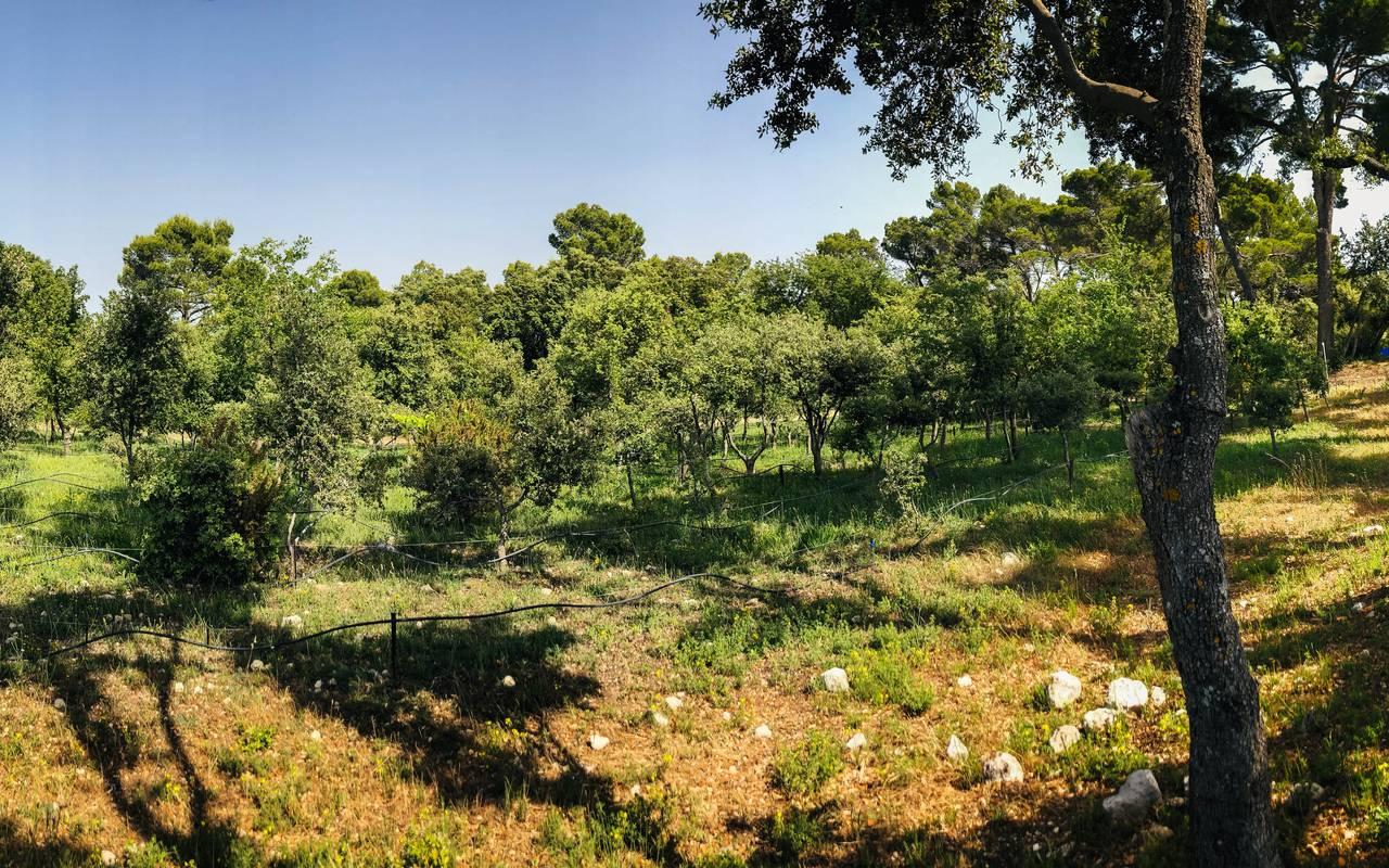irrigation truffière - vignoble provence
